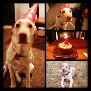 Ranger's 1st birthday